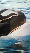 ‐killer whale‐