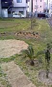 空き地に植木を植えよう