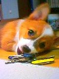 『犬!写真』『わんこ自慢』♪