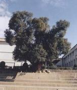加治木高校