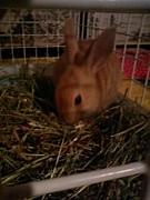 ミニウサギが大好きぃ☆★〃