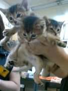 ♧野良猫写真館♧