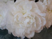 FELICE*Flower Design Studio