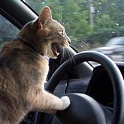 クルマの運転が好き
