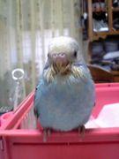 だってお前(鳥)が好きなんだ!