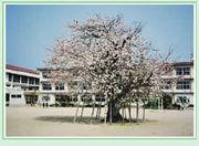 新旭南小学校