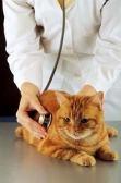 女性獣医師の集い