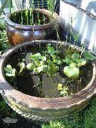 癒し空間・水鉢ビオトープ