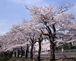 桜が丘2003卒