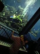 東海大学海洋博物館ボランティア