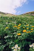 植物が好き(中南アルプス登山)