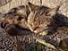 広島猫時間