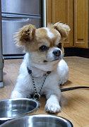 TIP a.k.a Jazzy Dogg
