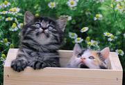 猫を守る会