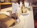 チーズ&発酵食品愛好家の集い