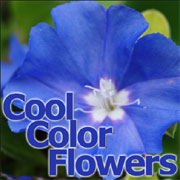 寒色系の花 同好会。