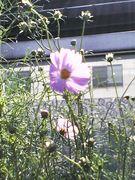 FLOWER PHOTO DIARY