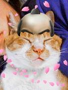 猫グッズ(=^・^=)♡