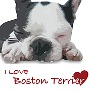 I Love ボストンテリア