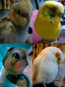 ★:。鳥類*愛好家。:★