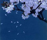 大阪で花見@桜の下でタージンと