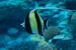 Happy  Diving計画推進委員会