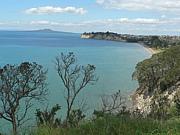 North shore New Zealand