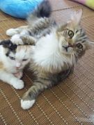 猫カフェ☆倶楽部ねこコレ