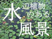 水辺植物のある風景★