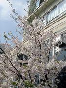 江戸川区小松川第一中学校