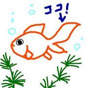 金魚のしっぽは最高だ!