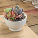 succulent plants shop   HOME