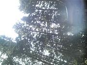 日本大学生物資源森林資源科学科