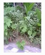 家の庭にXXXが住んでるぞぉ!
