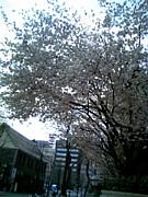 札幌バラ色の30〜40代独身者の会