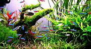 熱帯魚@アクアリウム。