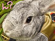ウサギと暮らす@熊本