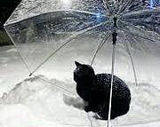 雨と気分と傘の色