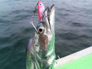 タチウオ釣りが好きっ!