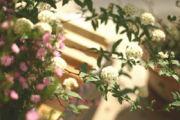 野花がすき
