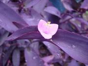 紫色が好き