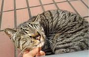 Chigasak Cat's Protect