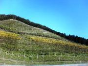 青空とワイン