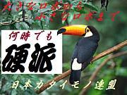 日本カタイモノ連盟mixi出張所