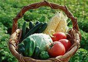 ●食の安全を考えよう!