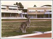 シドニー日本人学校 '90&'91