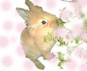 ウサギnaオンナノコ