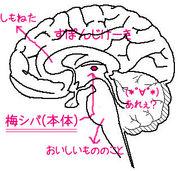 【モウ】TERU脳【ダメポ】