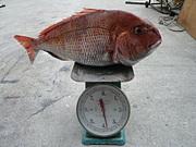 釣りにハマる研究会