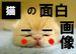 猫の面白画像